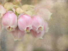 pale and delicate flower buds...