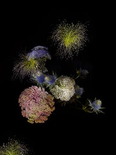I love this. Botanical specimens arranged to look like fireworks.