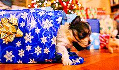 They open everyone's Christmas gifts. | 17 Ways Sweet Puppies Show Off Their Spiciness