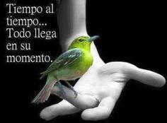 Descargar Imagenes De Aves Para Facebook