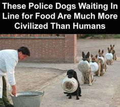 Animal Crackers, Police Dogs, Image Of The Day, Just For Laughs, Funny Images, Funny Dogs, Make Me Smile, Inspirational Quotes, Puppies