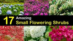 Discover the best small flowering shrubs for your home with our guide. Learn how to choose, plant, and maintain small shrubs and hedges in our handy and helpful guide! Dwarf Flowering Shrubs, Evergreen Shrubs, Trees And Shrubs, Small Flowers, Yellow Flowers, Burning Bush Shrub, Bobo Hydrangea, Shrubs For Landscaping, Landscaping Ideas