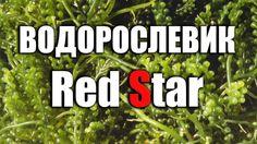 Водорослевик для морского аквариума.  Обзор фильтра Red Star