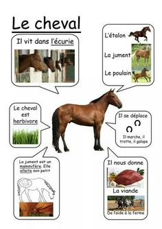 Cheval - Animaux de la ferme animals silly animals animal mashups animal printables majestic animals animals and pets funny hilarious animal French Phrases, French Words, French Teacher, Teaching French, French Education, Kids Education, How To Speak French, Learn French, Life Science