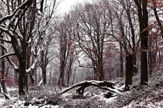 Snowy Forest  by Emad Nematollahi on 500px