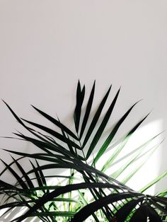 lumière/vegetal --
