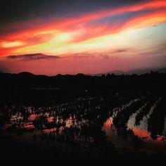 A rural sunset on Phu Quoc.  Best sunsets on the island can be seen here: http://ift.tt/1N9D7R5  #skyporn #sunset #sunrise #phuquoc #vietnam #skylovers #beach