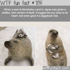 Funny Animal Pictures Of The Day – 30 Pics – Lovely Animals World Lustige Tierbilder des Tages – 30 Bilder – Lovely Animals World Funny Animal Memes, Cute Funny Animals, Funny Animal Pictures, Cute Baby Animals, Funny Cute, Funny Pics, Wild Animals, Funniest Animals, Nature Animals