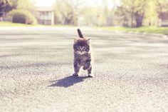 tiny amigo