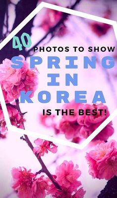 Want the best time to visit South Korea? Our photos of Korean cherry blossom and canola flower blooms may convince you to see spring in Korea for yourself! Travel Advice, Travel Guides, Travel Tips, Travel Destinations, Travel Articles, Travel Goals, Travel Essentials, South Korea Travel, Asia Travel