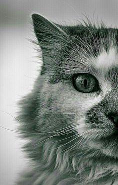 Portrait in black & white
