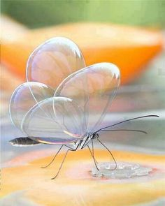 Rare photo of translucent butterfly