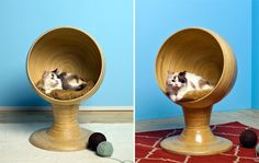 Crazy cat room...