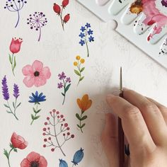 Illustrations Sharing Page ( Watercolor Cards, Watercolor Flowers, Watercolor Paintings, Plant Drawing, Painting & Drawing, Flowers Draw, Diy Flowers, Floral Illustrations, Illustration Art