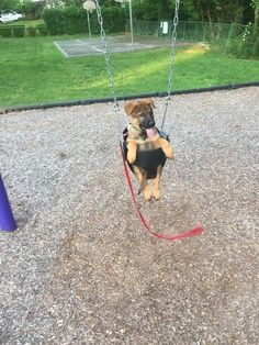 This champ who knows how to make the most of a day at the park. | 29 Pictures That Will Make Your Day A Wee Bit Better