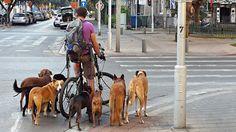 Uma Cinquentona Brasileira em Israel: Cachorros em Israel!!!