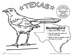 First Grade Animals Life Science Worksheets: Texas State Bird Bird Coloring Pages, Free Printable Coloring Pages, School Week, School Fun, Texas Animals, Texas Crafts, Geography Lessons, State Birds, Texas History