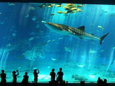 As if the city of Barcelona does not offer an endless variety of amazing architecture, stunning sights and delicious delicacies....the Barcelona Aquarium offers an unparalleled look at marine life!