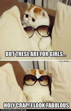 Ha! That cats face is smushed!
