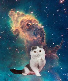 Cats In Space Wallpaper Cat More