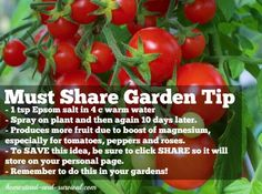 Must Share Garden Tip for tomatoes, peppers, and roses. Combine 1 tsp Epsom salt with 4 cups warm water; spray on plants and then again 10 days later. Produces more fruit due to boost of magnesium especially these types of plants.