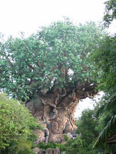 Most fabulous tree ever!  I could walk around it a million times and still see something new.  The Tree of Life at Disney World