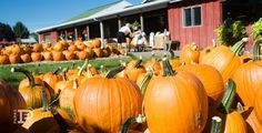 Best Pumpkin Patches in Middle Tennessee