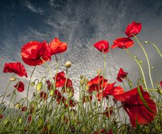 'Rojo', por Scott Wilson, tomada perto de Mansfield, Nottinghamshire, Inglaterra (Elogiada).