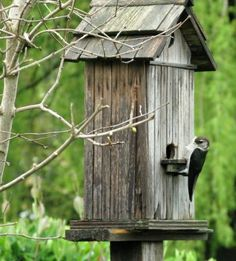 Funky Junk Interiors: The birdhouse garden has guests!   I'll make this as a gift :)