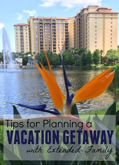 Tips for Planning a Vacation Getaway with Extended Family. Plan your next family vacation to Orlando with these tips! I Want To Travel, Travel With Kids, Family Travel, Places To Travel, Places To Visit, Travel Destinations, Attractions In Orlando, Extended Family, Tourist Spots