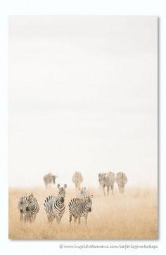Walking The Dust. Door communitylid IngridVekemans - NG FotoCommunity ©
