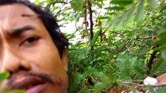 Dokumentasi Riset Sarang Burung-Cabean Jawa(04)