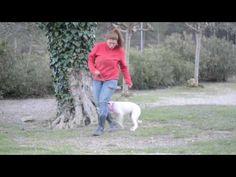 Lechee sucht liebevolles Zuhause - http://www.tier-kleinanzeigen.com/ads/lechee-sucht-liebevolles-zuhause/