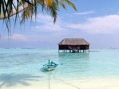 Les MaldivesVoir toutes les photos de Franck Laille