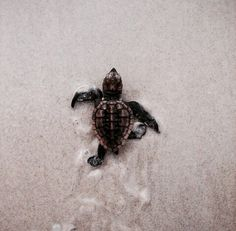 .Years ago I was in San Jose Mexico walking on the beach and witnessed what seemed like hundreds of baby turtles hatching & running for the surf... it was an awesome sight