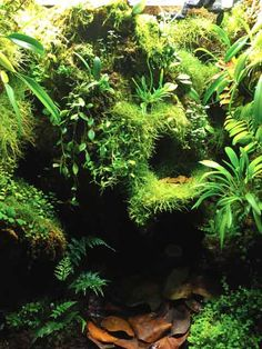 Tree Frog Habitat? …