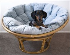 I Love These Chairs, Theyu0027re Called Moon Or Papasan   The Dogu0027s Cute