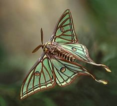 Ecosia - the search engine that plants trees Nouveau Tattoo, Art Nouveau, Beautiful Bugs, Beautiful Butterflies, Luna Moth Tattoo, Lunar Moth, Moon Moth, Cool Bugs, Flying Flowers