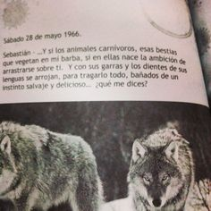 28 de mayo 1966..   Mis bestias quieren tragarlo todo, bañadas en un instinto salvaje y delicioso #sinprisa ;) #agobiodeprisa #Sebastian #Azucena #libro #historia #amor #juanjomarte #bestias #salvajes #pasión #amor #almas #encuentro