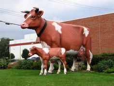 Anderson Erickson Dairy, Des Moines, Iowa - these cows have stood there all my life, making the best milk ever!!!