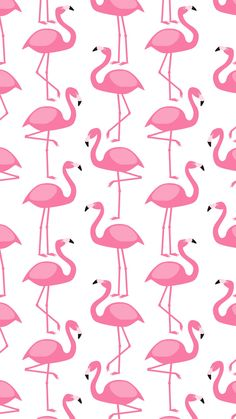 New wallpaper pink flamingo patterns ideas Pink Flamingo Wallpaper, Pink Wallpaper Iphone, Emoji Wallpaper, Trendy Wallpaper, Tumblr Wallpaper, New Wallpaper, Disney Wallpaper, Screen Wallpaper, Pink Flamingos