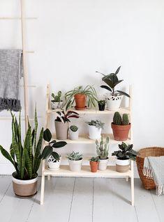 DIY: Cómo construir un soporte para plantas con forma de escalera