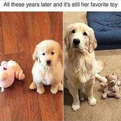 Cute animals - 40 Animal Pictures to Make You Laugh on Bad Days Funny Animal Memes, Cute Funny Animals, Dog Memes, Funny Animal Pictures, Cute Baby Animals, Funny Dogs, Animals And Pets, Fluffy Animals, Dog Humor