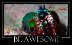 Just be awesome!