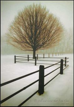 Amanti Art at Kohl's - This Solitude print by David Lorenz Winston features a tree in the middle of a snow covered landscape. Shop our entire selection of Amanti Art artwork at Kohl's. Foto Picture, Photo Tree, Winter Szenen, Winter Trees, All Nature, Human Nature, Snow Scenes, Winter Beauty, Jolie Photo