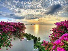 Autumn sunset on the Aegean...something about these fuschia color plants that's breathe taking.