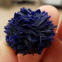 Azurite Rose crystals from the Congo. Natural Crystals, Stones And Crystals, Natural Gemstones, Minerals And Gemstones, Rocks And Minerals, Beautiful Rocks, Mineral Stone, Rocks And Gems, Healing Stones