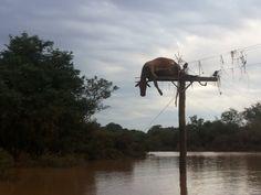 Após cheia do Rio Uruguai em São Borja, no Rio Grande do Sul (Foto: Flávio Robalo 07/2014)