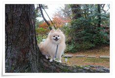 日々を記録。|犬たちとニコニコ生活
