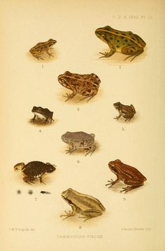 1910, pp. 589-1033 (Apr.-June) - Proceedings of the Zoological Society of London. - Biodiversity Heritage Library